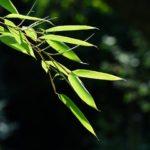 庭に生えた厄介な笹。除草剤「サンフーロン」は効くのか試した結果